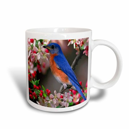 3dRose Beautiful Bluebird n Cherry Blossoms, Ceramic Mug, 11-ounce