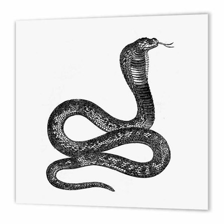 Black Stake - 3dRose Black and White Vintage Cobra Snake, Iron On Heat Transfer, 10 by 10-inch, For White Material