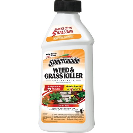 Spectracide Weed   Grass Killer Concentrate2  Hg 66001   16 Fl Oz