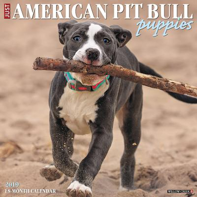 American Pit Bull Terrier Puppies 2019 Wall Calendar (Dog Breed Calendar) (Other)