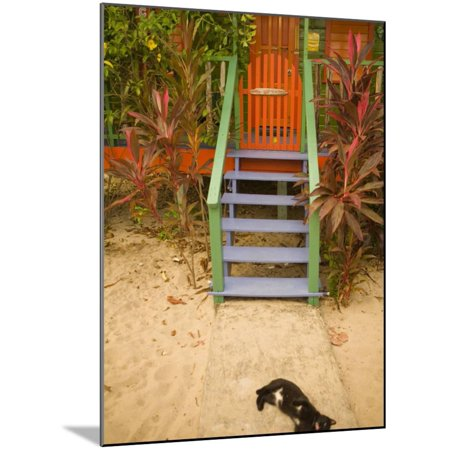 Cat Sleeping By Entrance, Placencia, Stann Creek District, Belize Wood Mounted Print Wall Art By John & Lisa Merrill