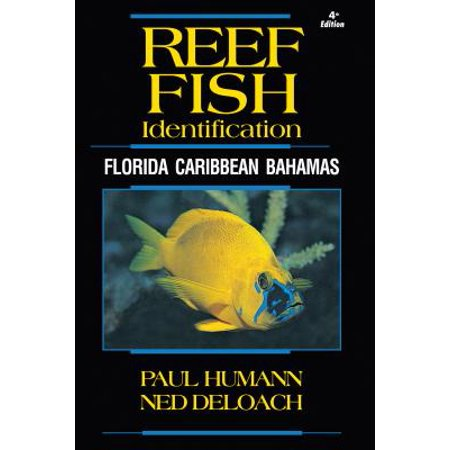 Reef Fish Identification : Florida Caribbean