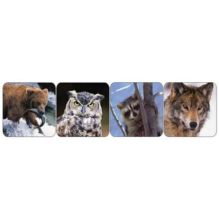 Wildlife Animals (real photos) Stickers - Theme - Photo Stickers