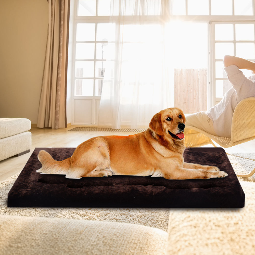 of amazingly pict best style bed cute small rascal puppy puppies dog your inspiration and for pup beds fascinating