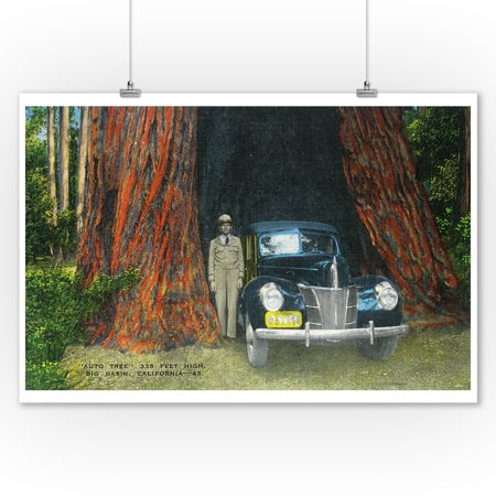 Big Basin State Park, California - View of the Auto Tree (9x12 Art Print, Wall Decor Travel Poster)