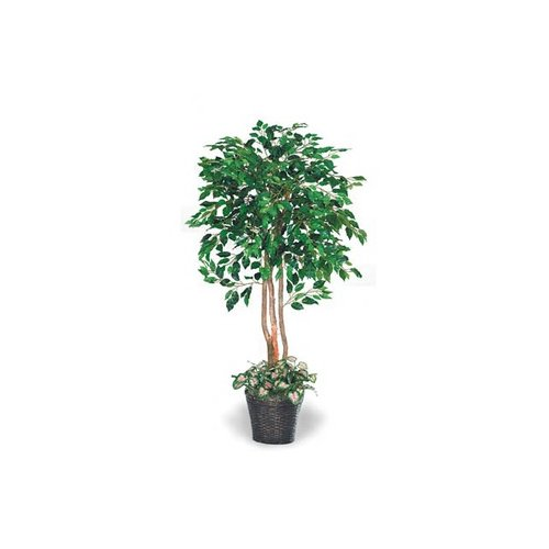 Labs Inc. 66'' Underplanted Green Ficus