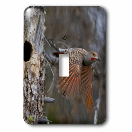 3dRose British Columbia, Red-shafted Flicker bird-CN02 GLU0084 - Gary Luhm, 2 Plug Outlet