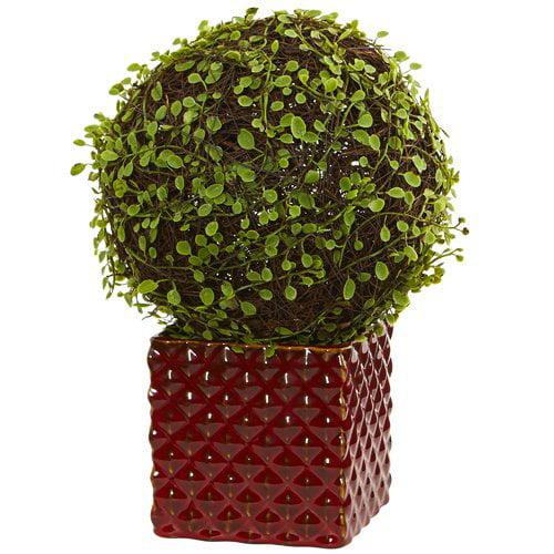 Fleur De Lis Living Mohlenbechia Ball Moss Topiary in Ceramic Cube