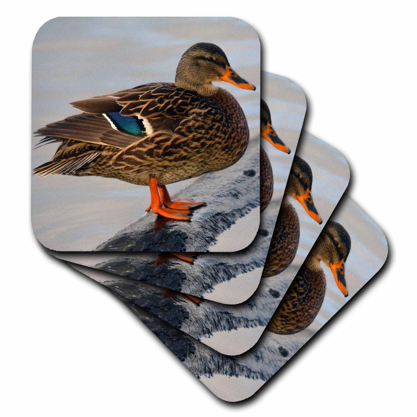 3dRose Female mallard at Crystal Springs Rhododendron Garden, Oregon, USA., Ceramic Tile Coasters, set of 4 by 3dRose