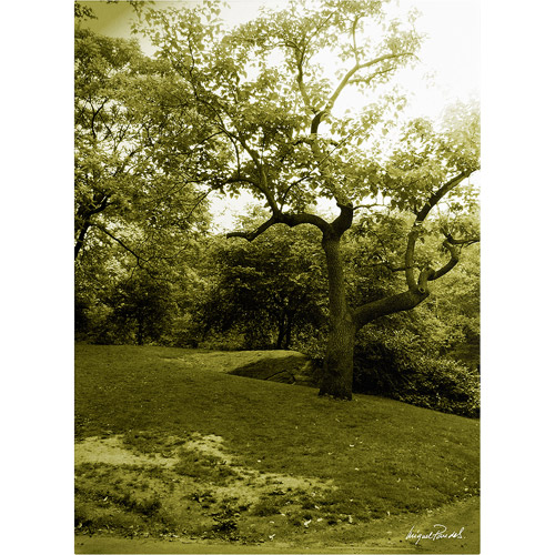"Trademark Fine Art ""Central Park II"" Canvas Art by Miguel Paredes"