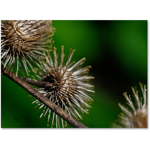 "Trademark Fine Art ""Prickly"" Canvas Art by Lois Bryan"
