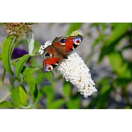Canvas Print Insects Admiral Animal Red Butterfly Butterflies Stretched Canvas 10 x 14