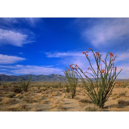 Ocotillo and the Vallecito Mountains Anza-Borrego Desert State Park California Poster Print by Tim Fitzharris - Desert Mountain Park Halloween