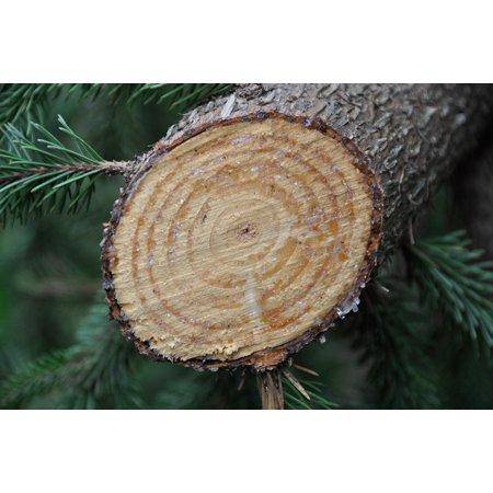 Wood Grained Laminate (LAMINATED POSTER Tree Grain Cut Wood Resin Vegetable Poster Print 24 x)