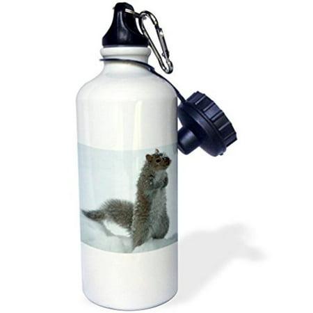3dRose Cute Squirrel in the Snow, Sports Water Bottle, 21oz (Snow Bottle)