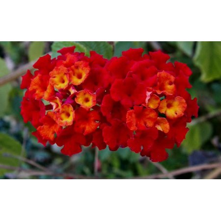 Image of Better Homes Qt Lantana Bhg