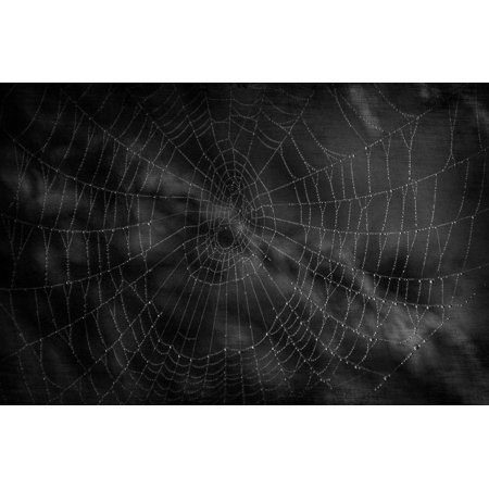 Canvas Print Spider Halloween Waterdrops Cobweb Scare Dark Stretched Canvas 10 x 14 - Cobweb Eyes Halloween