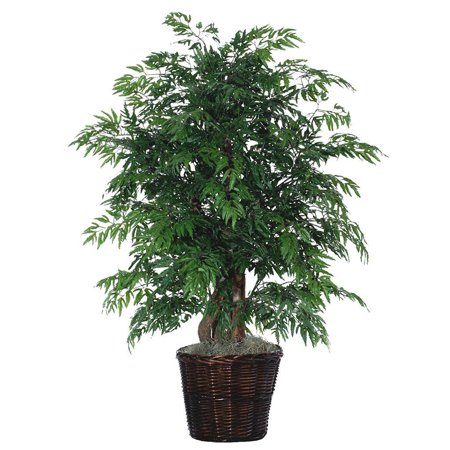 4 Ft Ming Aralia Extra Full Tree Walmart Com