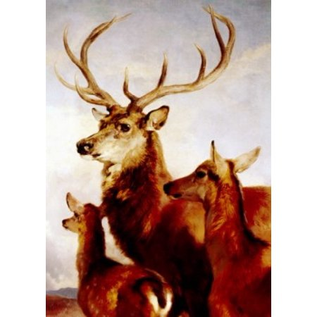 Deer, male, female and young, portrait, painted image Poster Print (18 x 24)