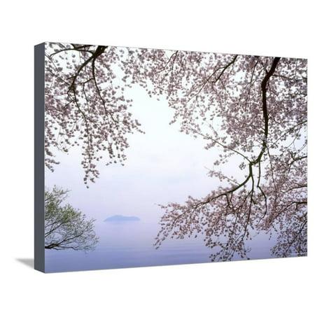 Cherry Blossoms and Lake Biwa Stretched Canvas Print Wall Art