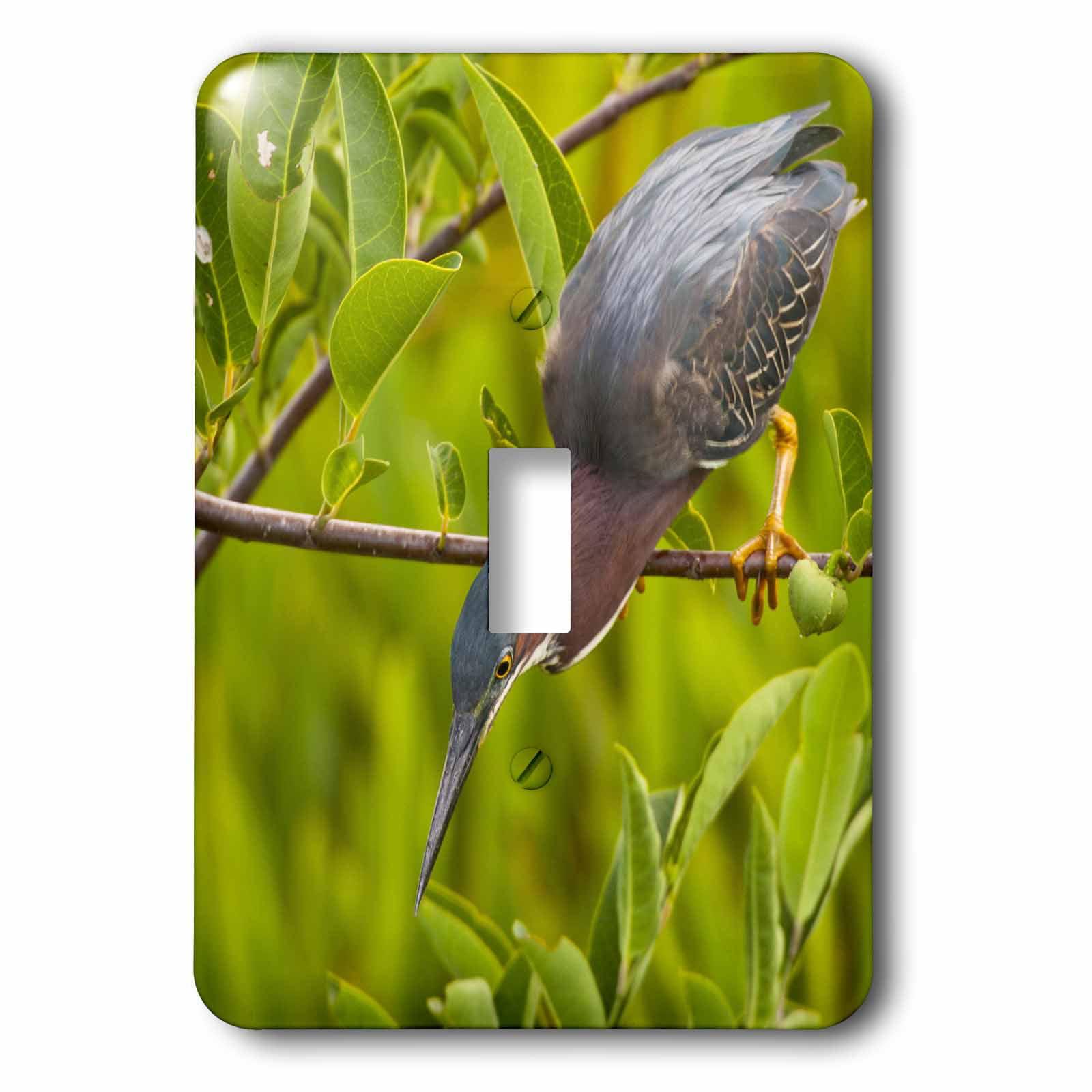 3dRose USA, Florida. Green heron bird hunting - US10 BJY0001 - Jaynes Gallery, 2 Plug Outlet Cover