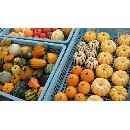 LAMINATED POSTER Harvest Vegetables Halloween Pumpkin Autumn Poster Print 24 x 36 - Halloween Colors Demo