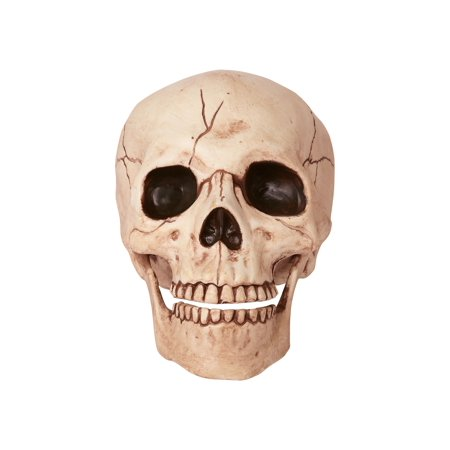 - Skull with Movable Jaw