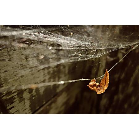 Water Gossamer (LAMINATED POSTER Web Spider Web Spider-work Water Drop Gossamer Poster Print 24 x 36)