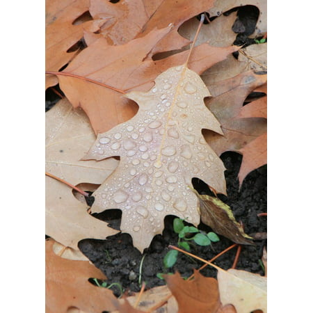 LAMINATED POSTER Fallen Droplets Water Leaves Leaf Autumn Poster Print 24 x 36