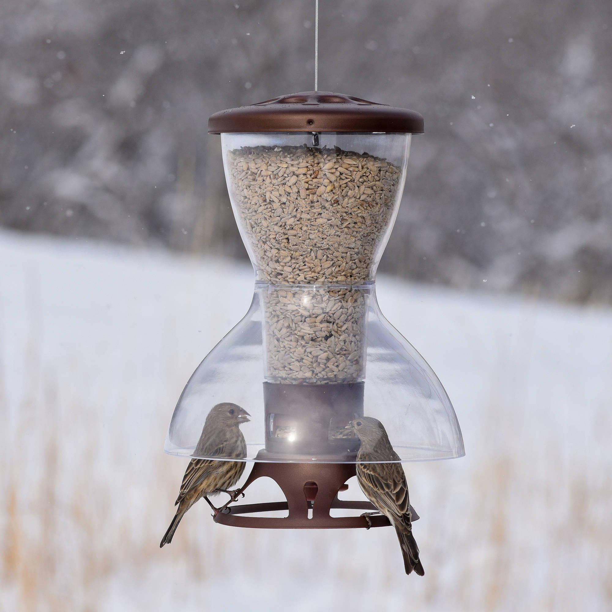 shop feeder proof squirrel resistant base suet bird how to