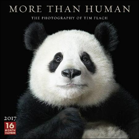 Tim Flach More Than Human Wall Calendar  2017 Wildlife By Sellers Publishing Inc