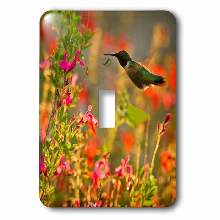 Humminbird Switch - 3dRose Ruby-throated Hummingbird in flower garden at sunrise, Texas, USA, Single Toggle Switch