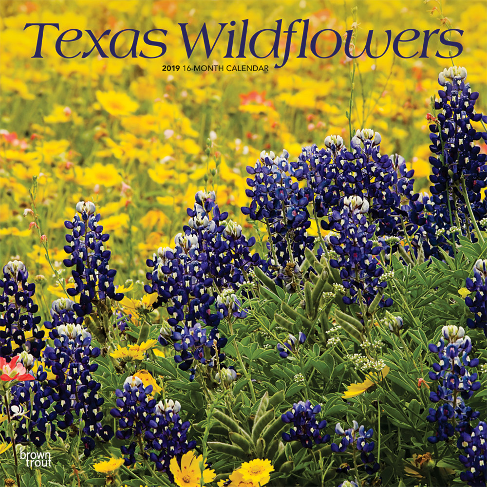 Texas Wildflowers 2019 12 x 12 Inch Monthly Square Wall Calendar, USA United States of America Southwest State Nature