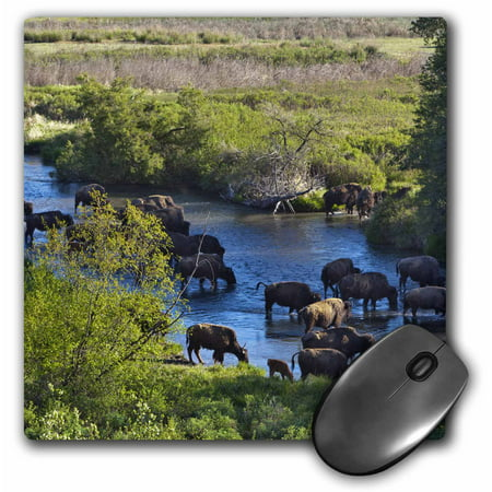 3dRose Bison, Mission Creek, National Bison Range, Montana - US27 CHA1703 - Chuck Haney, Mouse Pad, 8 by 8 inches
