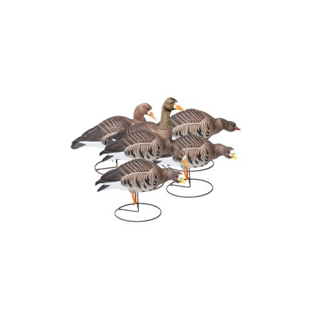 FINAL APPROACH Field Speckle Bellys 474183FA Decoy High Visibility Paint 6 Pack - Pregnant Halloween Painted Bellies