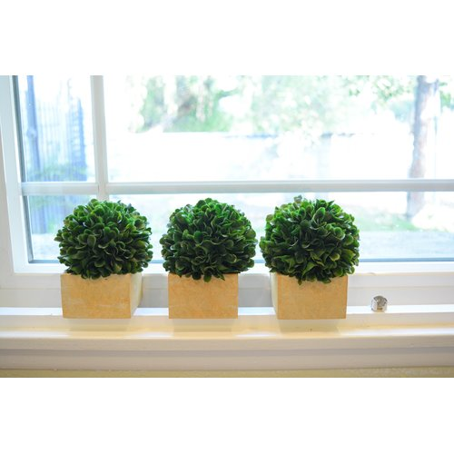 Charlton Home Faux Preserved Boxwood Desktop Topiary in Pot (Set of 3)
