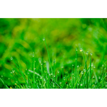 LAMINATED POSTER Water Rush Grass Garden Drip Dew Meadow Poster Print 11 x
