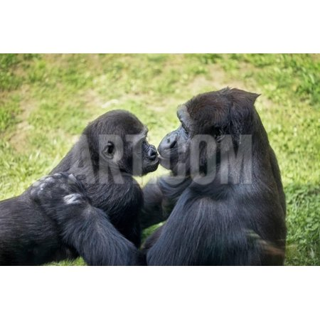 Mother Gorilla Kissing Her Baby Print Wall Art By luckybusiness (Babies Kissing)