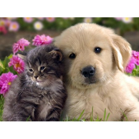 Laminated Poster Best Friends Cat & Dog Kitten Puppy Cute Cuddly Poster Print 24 x