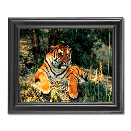 Bengal Tiger Laying On Rocks Photo Wall Picture Black