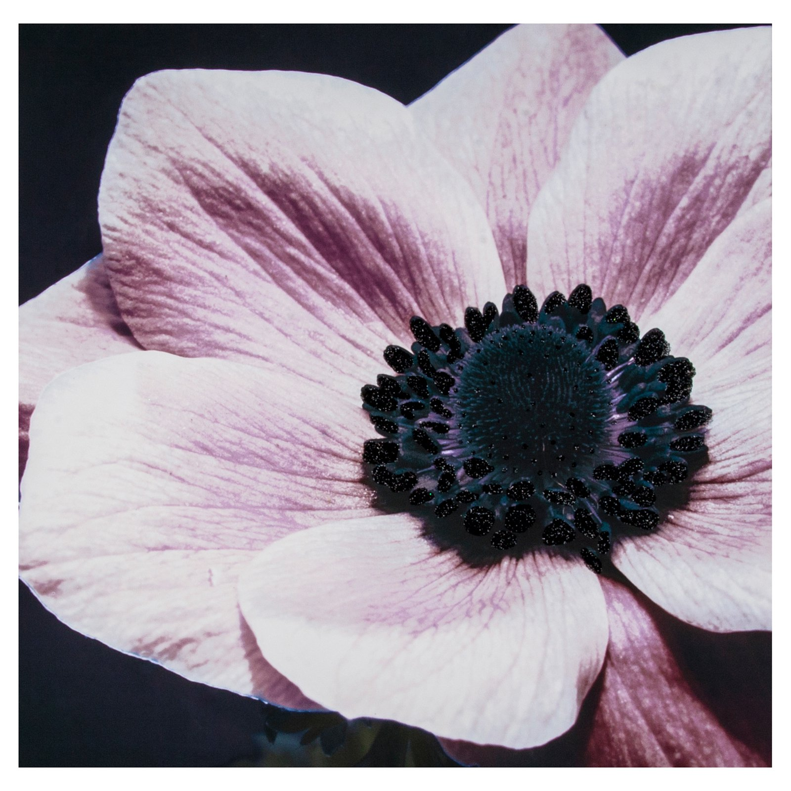 Curio Floral With Glitter Canvas Wall Art - 24W x 24H in.