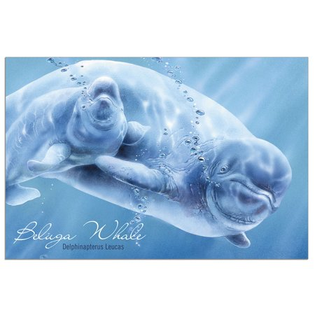 - Tree-Free Greetings Whale Beluga Classic ECOnotes Blank Note Cards-FS66922