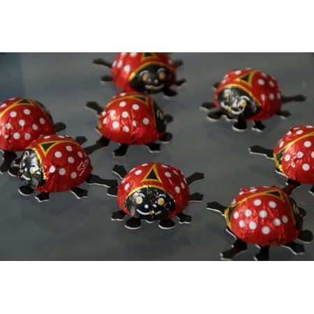 LAMINATED POSTER Ladybug Lucky Ladybug Beetle Decoration Poster Print 24 x 36 (Ladybug Decorations)