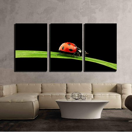 wall26 - 3 Piece Canvas Wall Art - Ladybug on Grass Isolated Black Background - Modern Home Decor Stretched and Framed Ready to Hang - 16
