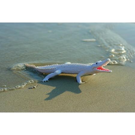 LAMINATED POSTER Prop Beach Wave Sand Toy Alligator Poster Print 24 x (Gator Wake)