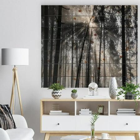 DESIGN ART Designart 'Sunbeams through Black White Forest' Forest Print on Natural Pine (Black Forest Wood)
