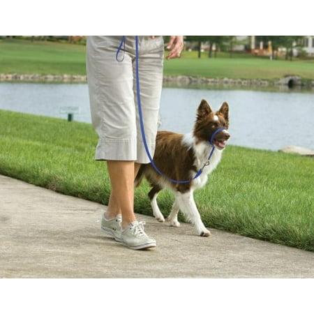 Petsafe Gentle Leader Dog Head Collar Medium Blue Walmart