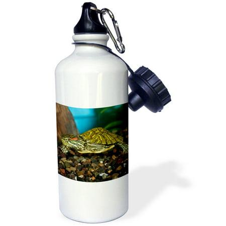 3dRose Ornate Red Ear Slider turtle - NA02 DNO0772 - David Northcott, Sports Water Bottle, 21oz
