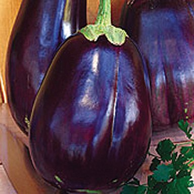 Image of Seeds of Change Eggplant - Imperial Black Beau SI1018