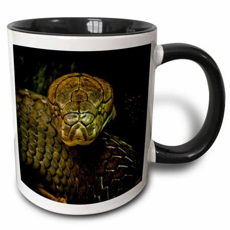 3dRose Cobra Snake Green Coiled - Two Tone Black Mug, 11-ounce
